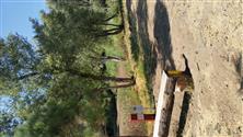 White Pines dgc