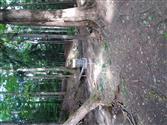 Chestnut ridge dgc