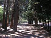 Chabot Park DGC