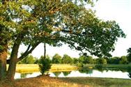 Selah Ranch - Creekside