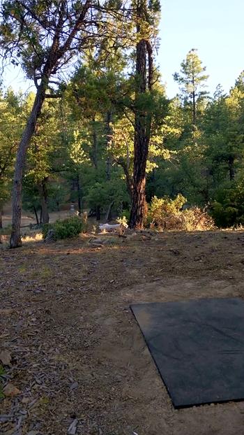 Emmanuel Pines Camp image